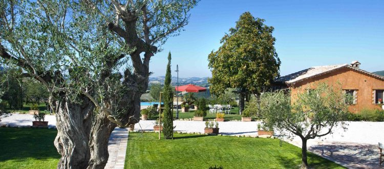View from the Olive tree apt. terrace