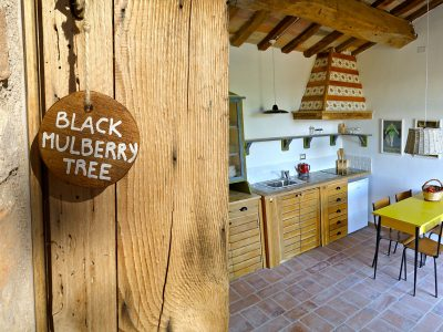 The Black Mulberry Tree apt.