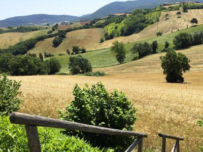 Field of wheat at La Corte del Gusto